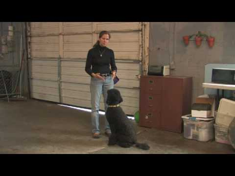 Dog Training : How to Train Dog Not to Bite
