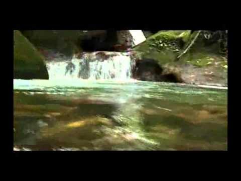 Lugares Turisticos de Ecuador: Sucua un lugar turistico de la Amazonia de Ecuador