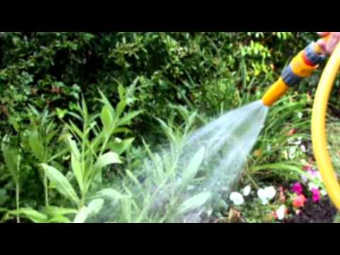 Signs Of Over Watering Plants   Sound Effect 18