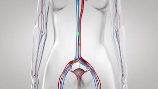Au coeur des organes : La régulation du cycle ovarien