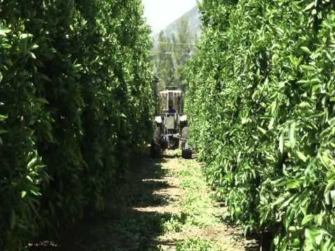 A.L.G. Estates Citrus Orchard Pruner