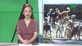 Bầy chó ăn thịt chủ, chỉ còn vụn xương | VTC14