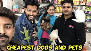 CHEAPEST DOGS | Sanjhalika Vlog