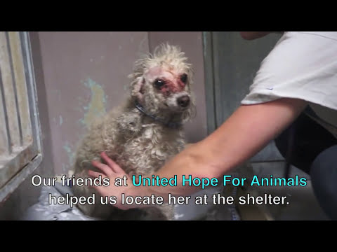 A Severely Neglected Dog Gets A Fairytale Rescue - Please Share!