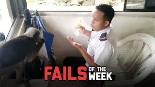 Monkey Steals From Security Guard - Fails of the Week