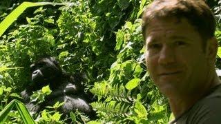 Gorilla shows Steve who