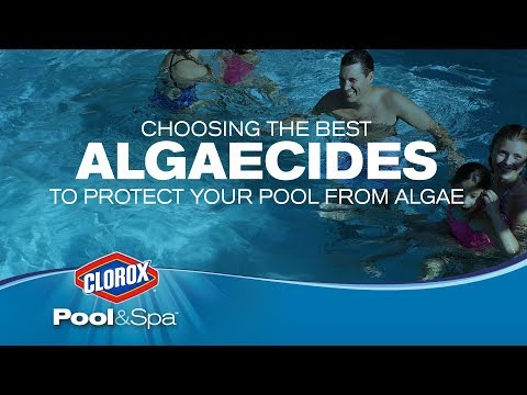How to Protect Your Pool from Algae Blooms:  Clorox® Pool&Spa™