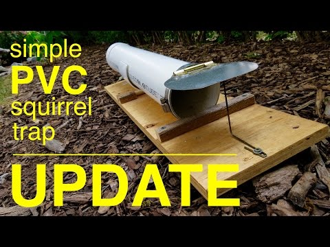 How to make ● a HUMANE PVC squirrel trap ●  U P D A T E  !!!