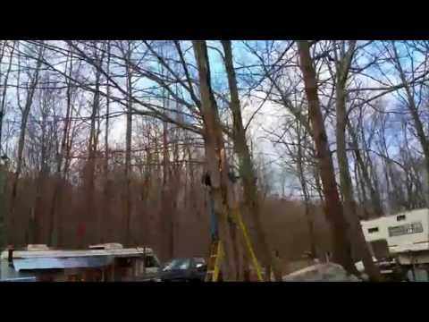 Cutting Down Trees at The Off Grid Tiny House