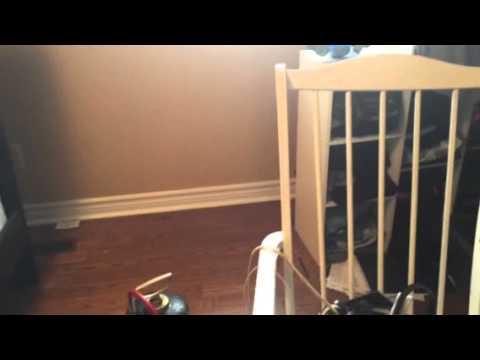 Wood Beetle Treatment