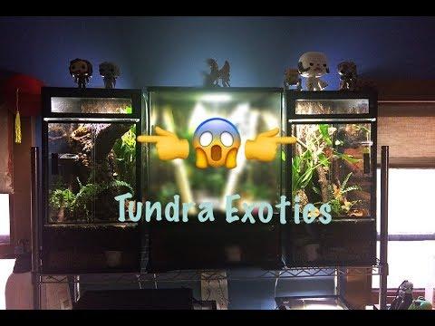 Tundra Exotics 20gal High Vert Conversion