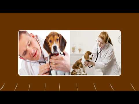 Things to Keep In Mind for Dog Worm Treatment