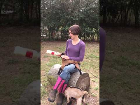 How to Bottle-Feed Your Newborn Goat!