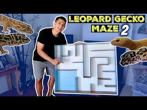 LEOPARD GECKO MAZE PART 2!!