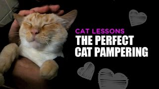 The Perfect Cat Pampering