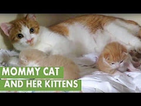 Newborn kittens -  Newborn kittens cry when mom is away -  Super Cute and Funny Kitten Moments #3