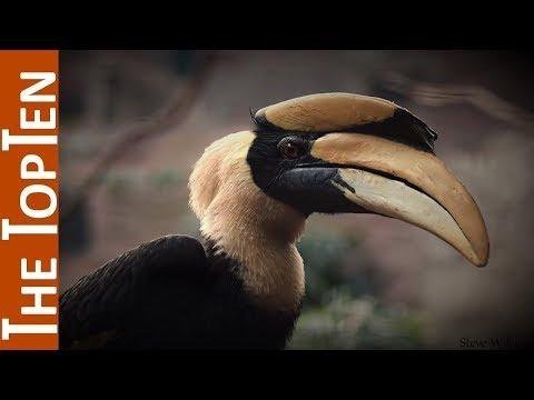 The Top Ten Birds With Unbelievable Beaks