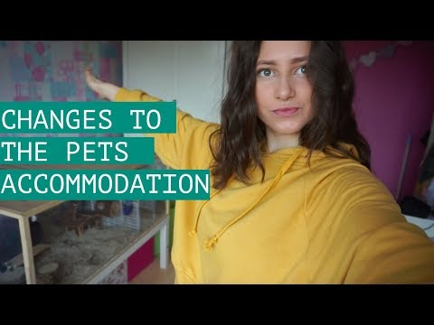 Changes To The Pets Accommodation