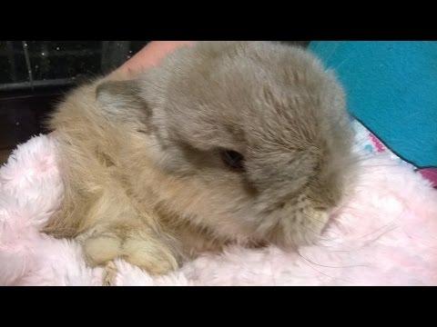 Building a Bunny Hutch (Trixie Kit)