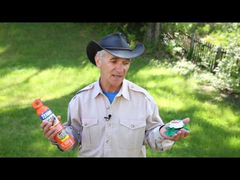 Ant Contact Killers vs. Ant Bait Products