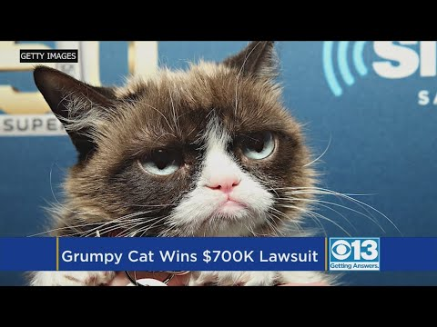Grumpy Cat Snatches Lump Of Cash In California Court