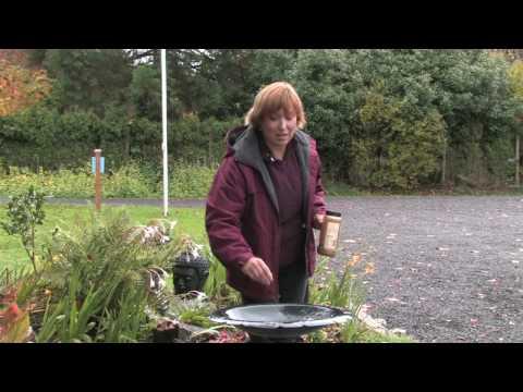 Garden Maintenance : How to Repel House Cats From Outdoor Bird Feeders