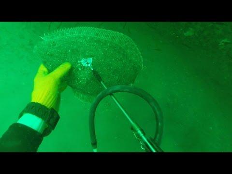 Tons of Flounder on the Ocean Floor