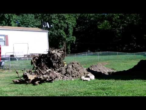 how to remove large tree stump
