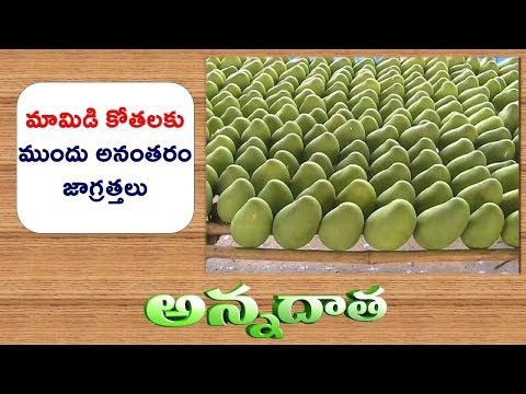 Mango Pre & Post Harvest & Ripenig Practices || ETV Annadata