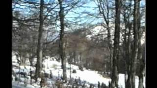 zebina šuma 1992