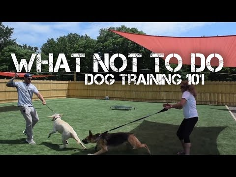 Aggressive German Shepherd Training- What NOT to do! Dog Training with America's Canine Educator-