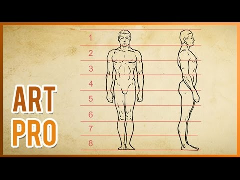 How To Draw The Human Body Proportions