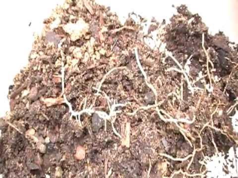 Termites eating my plants!!