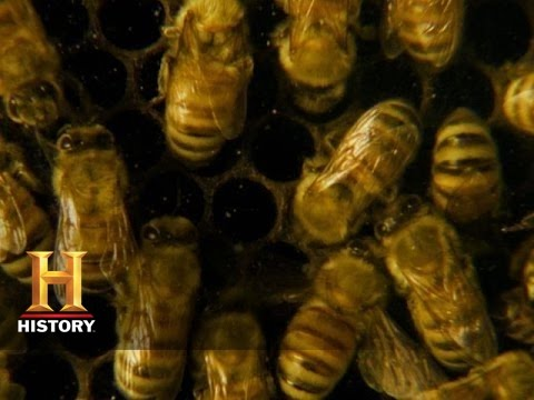 A World Without Bees | History