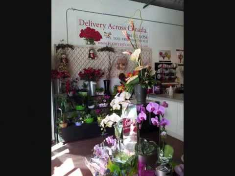 Flowers for Canada Langley BC Canada for Sale