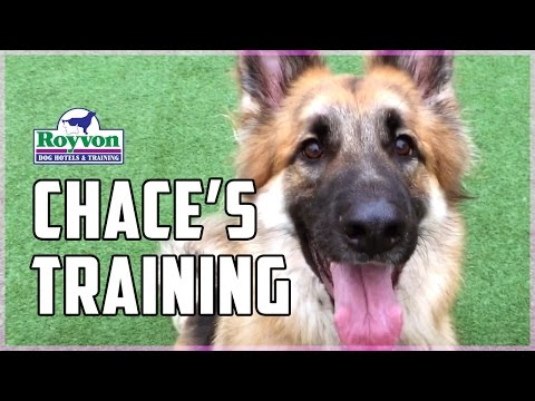 How to overcome your German Shepherd's aggression towards other dogs and people