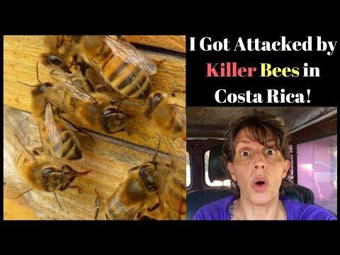 I Got Attacked by Killer Bees in Costa Rica!   Still love it here!