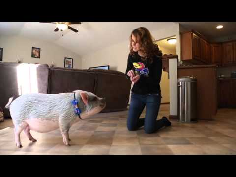 Lawrence couple adopts potbelly pig as a pet