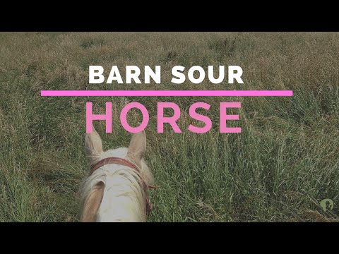 How to Fix a Barn Sour Horse