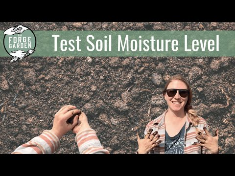 How to test the soil for the correct moisture level