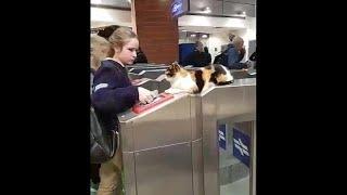 شاهد.. القط ميتسي نجم محطة قطارات في إسرائيل