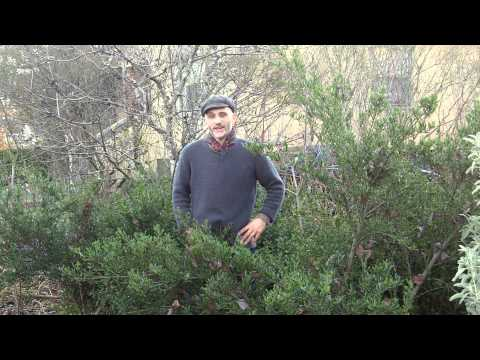 Heiko's World of Permaculture Plants: Soil Building Methodologies