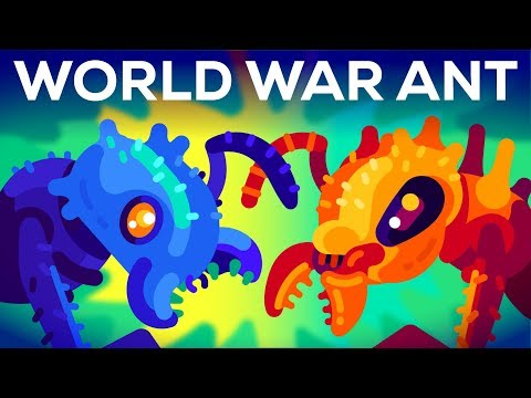 Xxx Mp4 The World War Of The Ants – The Army Ant 3gp Sex