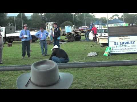 My 2 Dogs jumping the high jump at Maleny 2011 show.m2ts