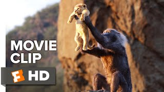 The Lion King Movie Clip - Circle of Life (2019) | Movieclips Trailers
