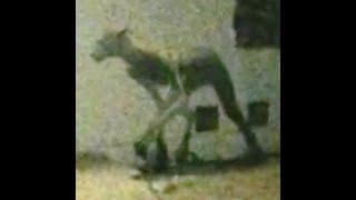 "BREAKING ""7ft Beast Roams In Argentina"""