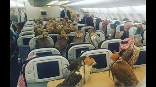 Los Videos mas Raros del Mundo 170 / Halcones son Pasajeros en un Avion