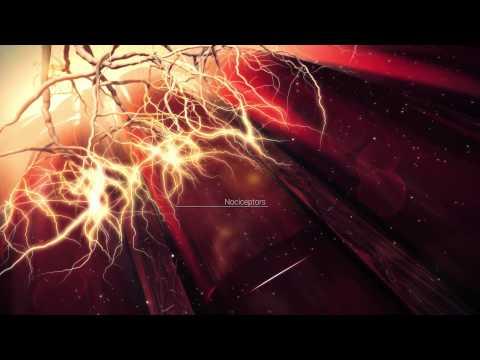 GSK HPL Deep Science: Muscle soreness