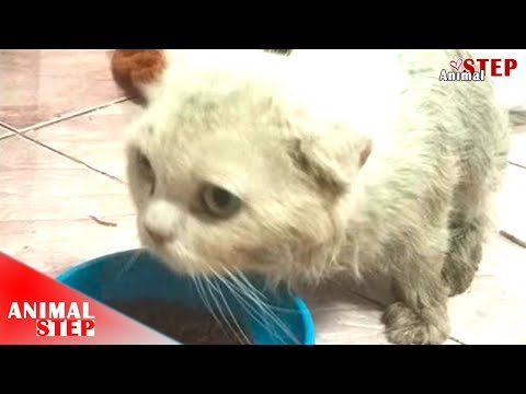 Persian Cat Lives In The Garbage for Months Getting Rescue and Adoption