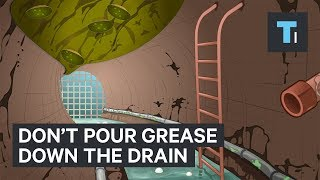 why you should never pour grease down the drain